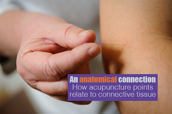 acupuncture and connective tissue 2